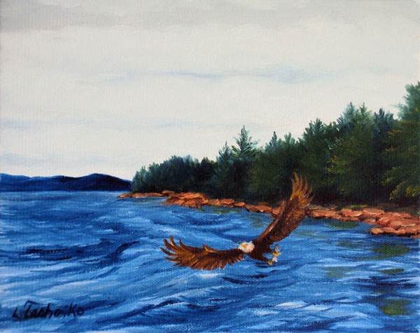Bald Eagle at Schoodic Shore by L. Tasheiko